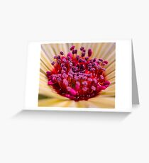 Living Stone Daisy in Yellow Greeting Card