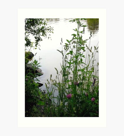 Grass on the banks of the Rideau River, Ottawa 2 Art Print