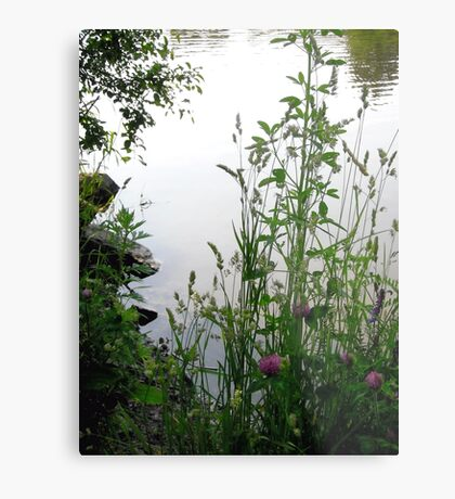 Grass on the banks of the Rideau River, Ottawa 2 Metal Print