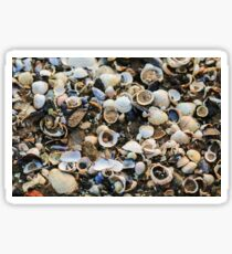 Mixture of Shells in Sand Sticker