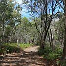 A walk in the bush by myraj