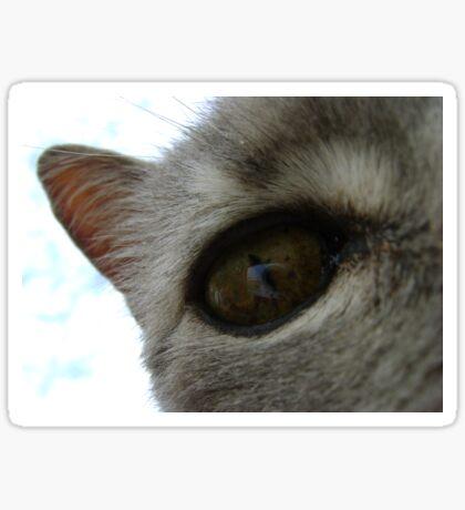 in a cat's eye Sticker