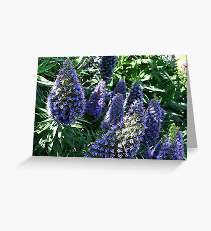 Blue Echium Greeting Card