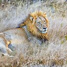 Lion, King of the Jungle by Jan Fijolek
