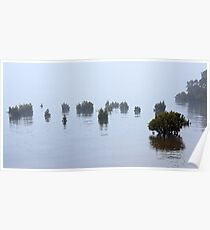 Mangroves at Rhyll - Flinders Island Poster