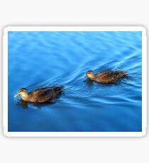 Tranquil Ducks Sticker