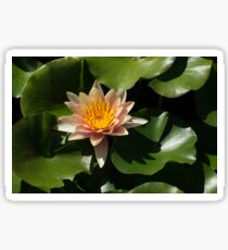 Exotic Colors - A Soft Coral Waterlily Sticker