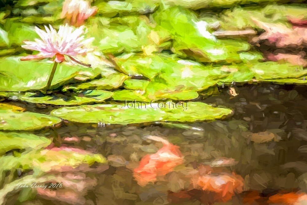 Waterlily and Koi by John Corney