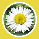 Daisy by ©The Creative  Minds
