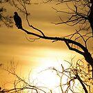 Smith's Falls Falcon... (aka osprey) by Jean-Paul Fournier