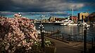 Inner Harbour at Victoria BC by Yukondick