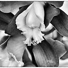 an Orchid... by Wieslaw Jan Syposz