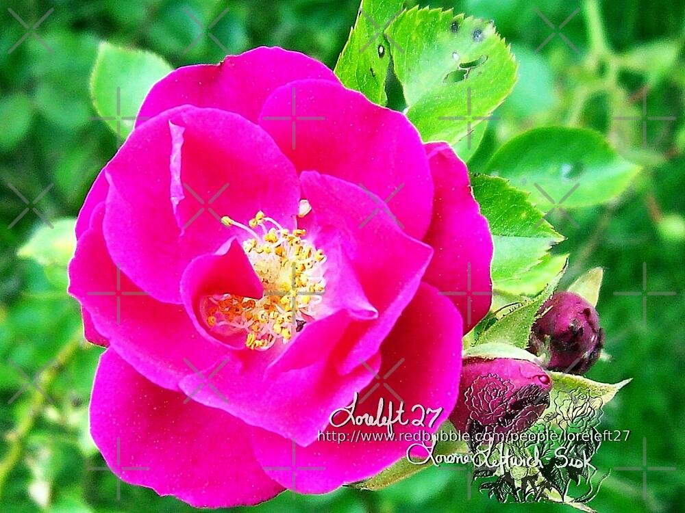 rosy  by LoreLeft27