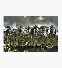 Everglades in HDR Photographic Print