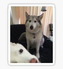 Photobomb Husky Sticker