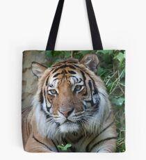 tiger at the zoo Tote Bag
