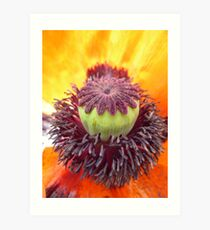 Middle of a Poppy Art Print
