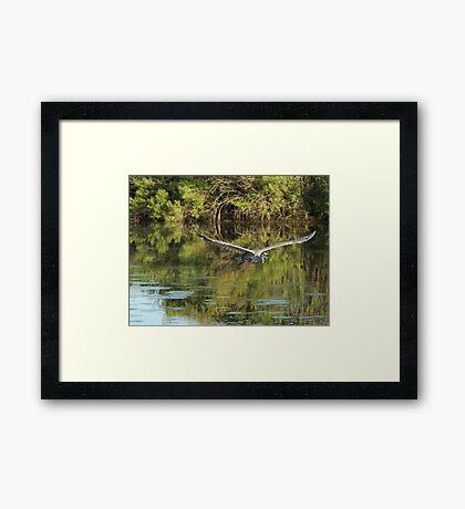 Heron at You Framed Print