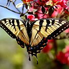 Butterflies INvade the Azaelas by Wviolet28