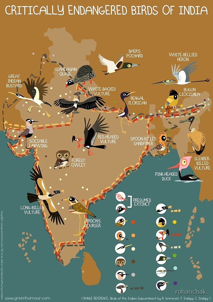 Critically Endangered Birds of India by rohanchak