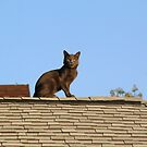 Cat on a Warm Shingle Roof by James & Laura Kranefeld