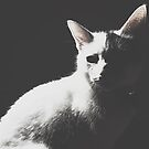 Portrait of a Kitten by AndrewBerry