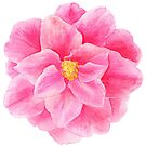 Camellia pink watercolor flower by Sarah Trett