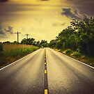 Louisiana Highway 82, an ample opportunity to see gators crossing the road by Victoria Avvacumova
