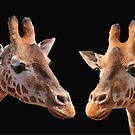 A Pair Of Giraffes by Jenny Brice