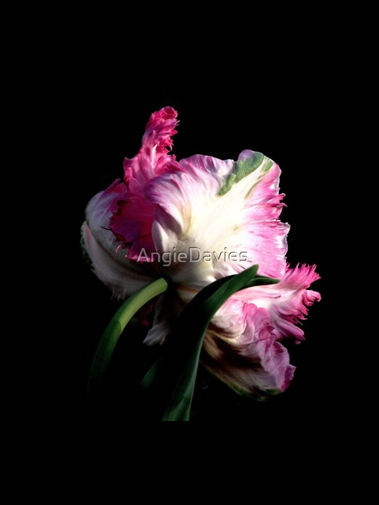 The Parrot Tulip An Artwork From Nature  by AngieDavies