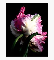 The Parrot Tulip An Artwork From Nature  Photographic Print