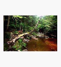 Fawn Below Welton Falls Photographic Print