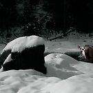 Moose in Profile Brook by Wayne King