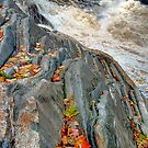 Maple Leaves Underlined at Livermore Falls by Wayne King