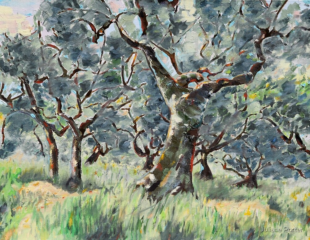 In the Umbrian Olive Grove by Juliane Porter
