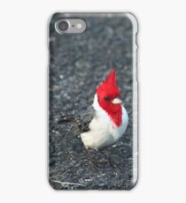 Red Cardinal II iPhone Case/Skin