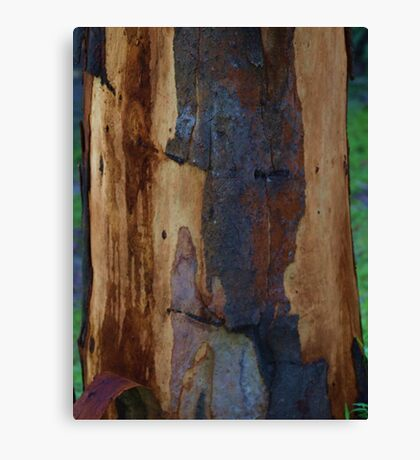 Abstract in Summer Gum Tree Bark  Canvas Print