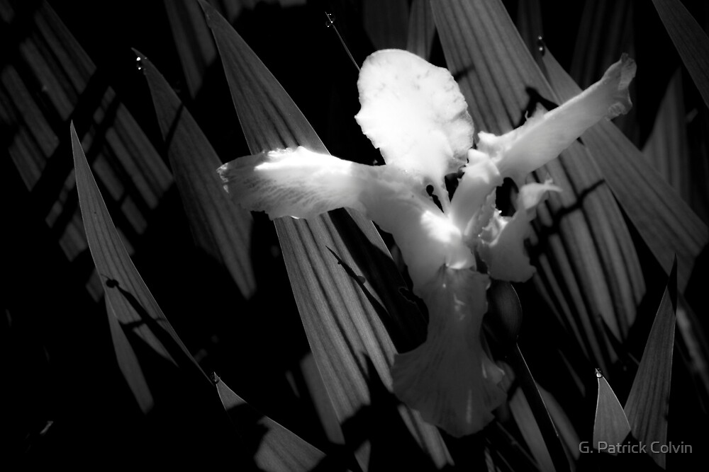 Angel Wings by Gregory Colvin