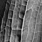 Mono Macro Leaf by David Lamb