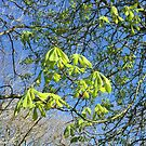 Spring is Sprung, Gorgeous Green by LindyLouMac