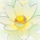 Lotus in abstract by aussiedi