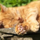 Ginger Cat Sleeping in Garden by RedSteve
