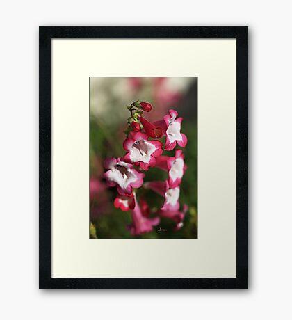 An Autumn Dream Framed Print