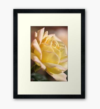 Romance the Rose Framed Print