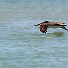 Close Flight by Bob Hardy