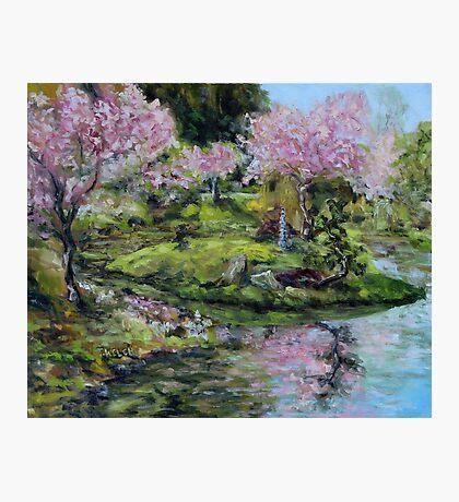Cherry Blossoms Mayne Island Japanese Garden Photographic Print