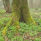 Mossy Tree Roots by Livvy Young