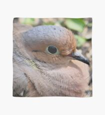 Mourning Dove Scarf