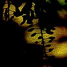 Arabian Nights by PictureNZ