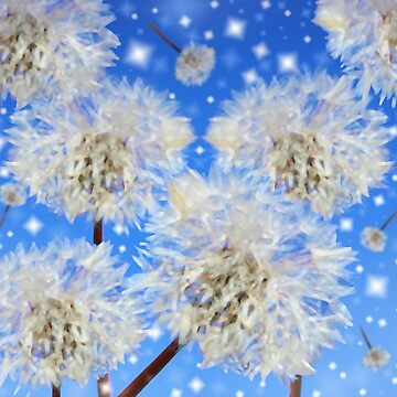 Make a wish by superferretIX
